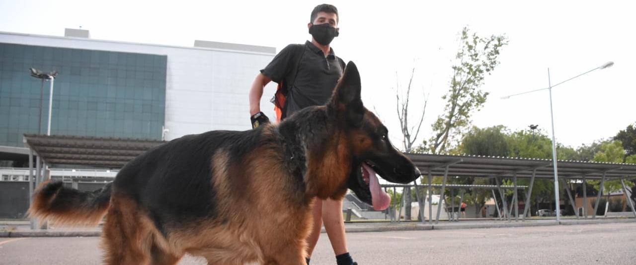 San Martín Limpio: hacete cargo de las heces de tu mascota